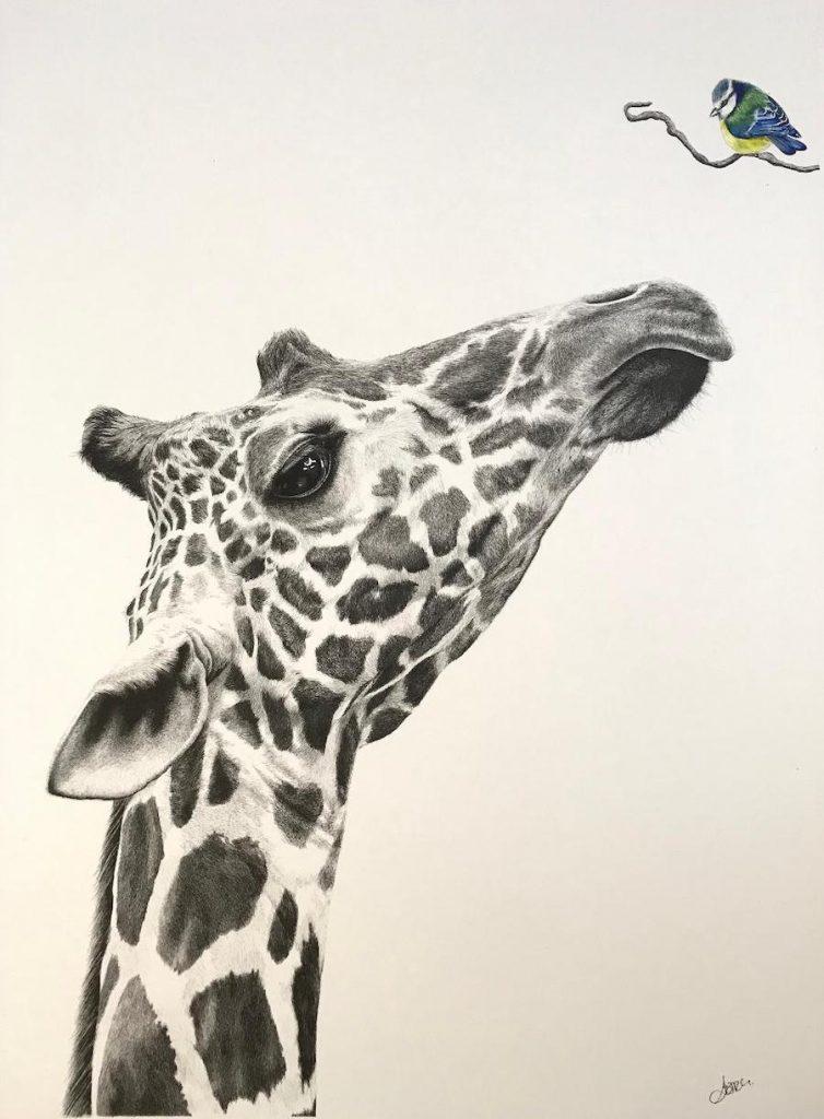 Giraffe – Tit